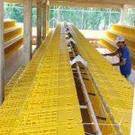 Venta y Fábrica de Corrales y Jaulas para gallinas ponedoras en Bogotá Colombia, México, Ecuador, Argentina, Panamá, Costa Rica, Paraguay, Chile. SISTEMA INDUSTRIAL