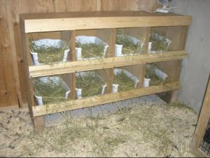 nidos de madera para aves ponedoras