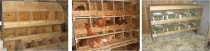 nidos de madera gallinas